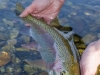 releasing-rainbow-trout.jpg