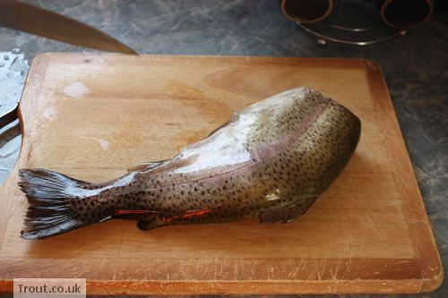 Trout Before Being Cut Open.