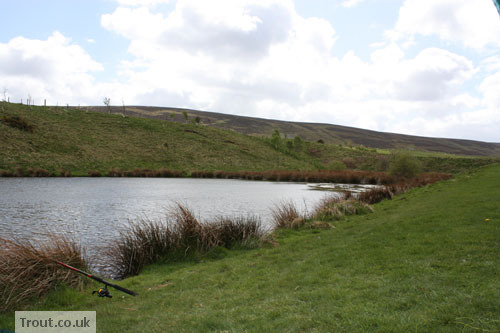 Tweedale Millennium Fishery Bait Pool