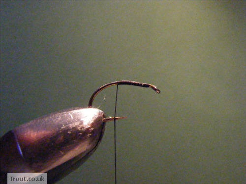 Black Spider Trout Fly Step 1