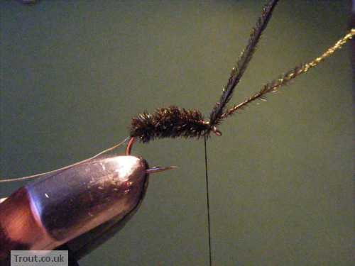Black Spider Trout Fly Step 4