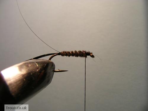 Cockscrow Fly Step 7