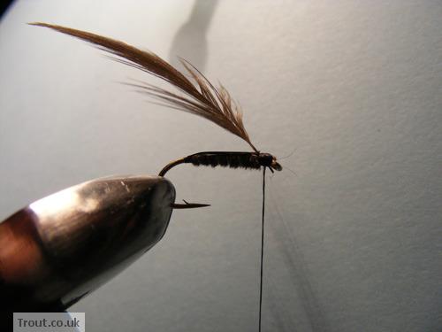 Cockscrow Fly Step 9