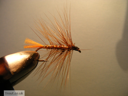 The Taxidermist Fly Step 10